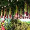 Tasting Australia – RockIt Apples
